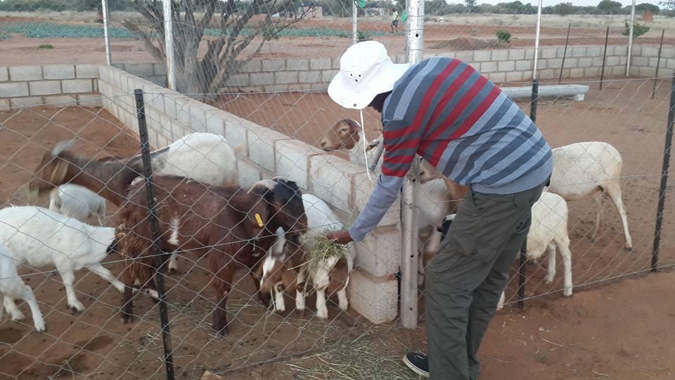 Lily's Petting Farm