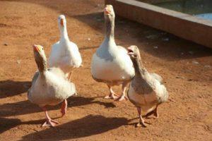 Lilys Petting Farm