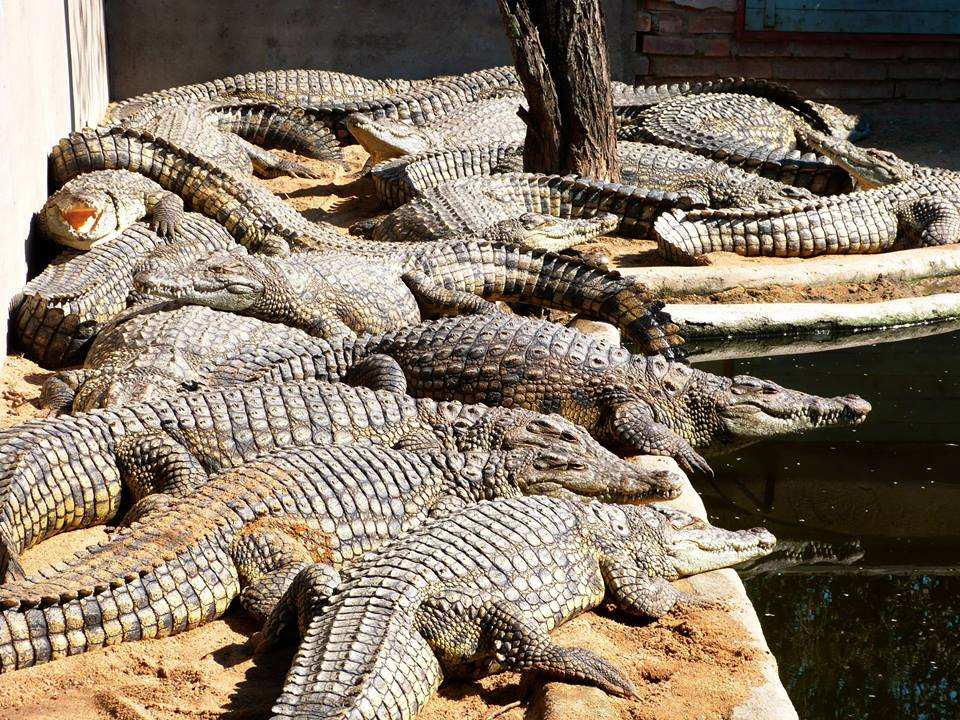 Douma's Crocodile Farm