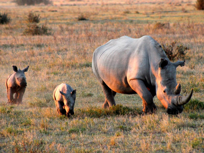Khama rhino sanctuary