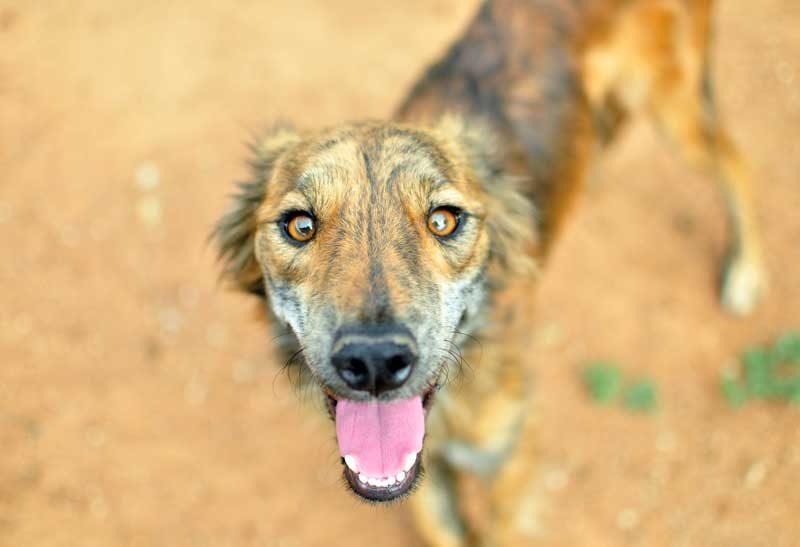 Pets in Botswana