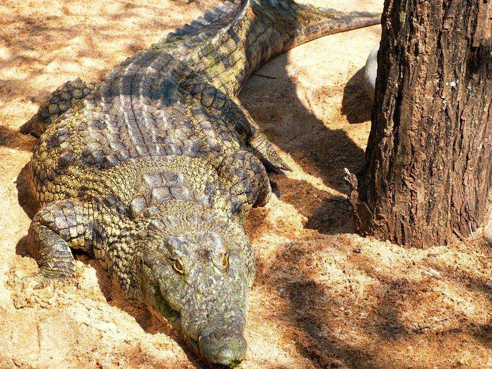 Douma's Crocodile Farm